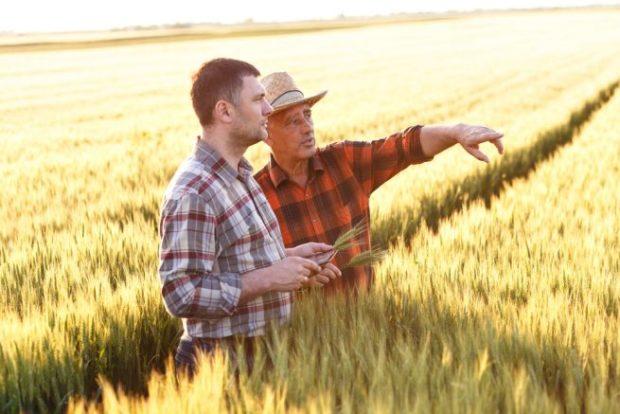 麦畑の中で遠くを指差す初老の男性と、それを見つめる若い男性
