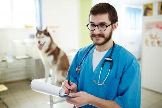 カルテを書く獣医