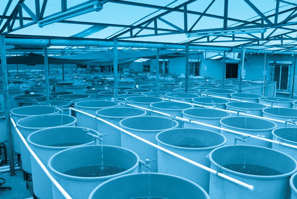 水産業の養殖場