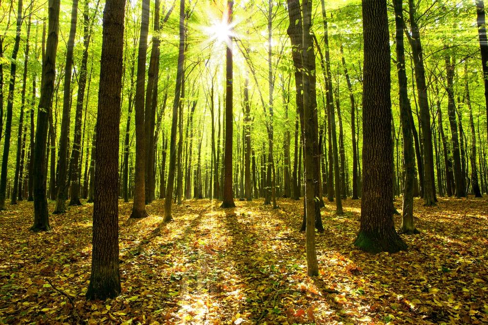 林の中に日が差し込む様子