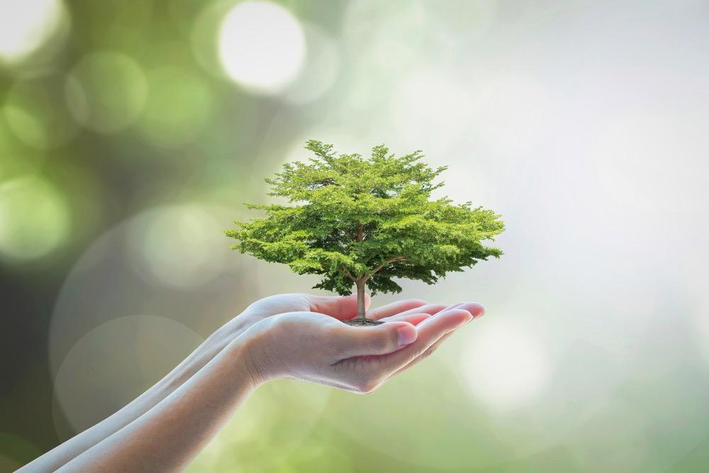 手の平に小さな木を持っている