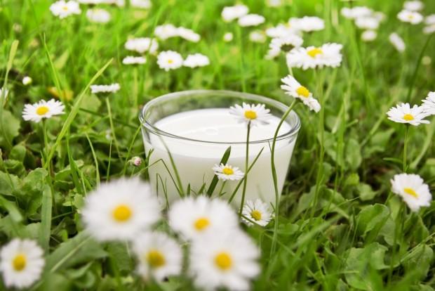 植物の中に置かれたグラスに入った牛乳