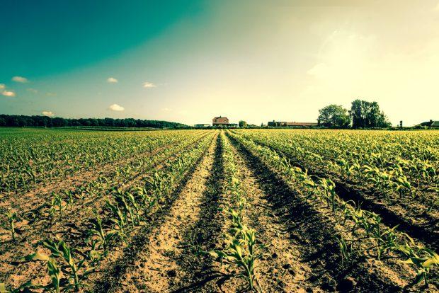 遠くまで広がる農地