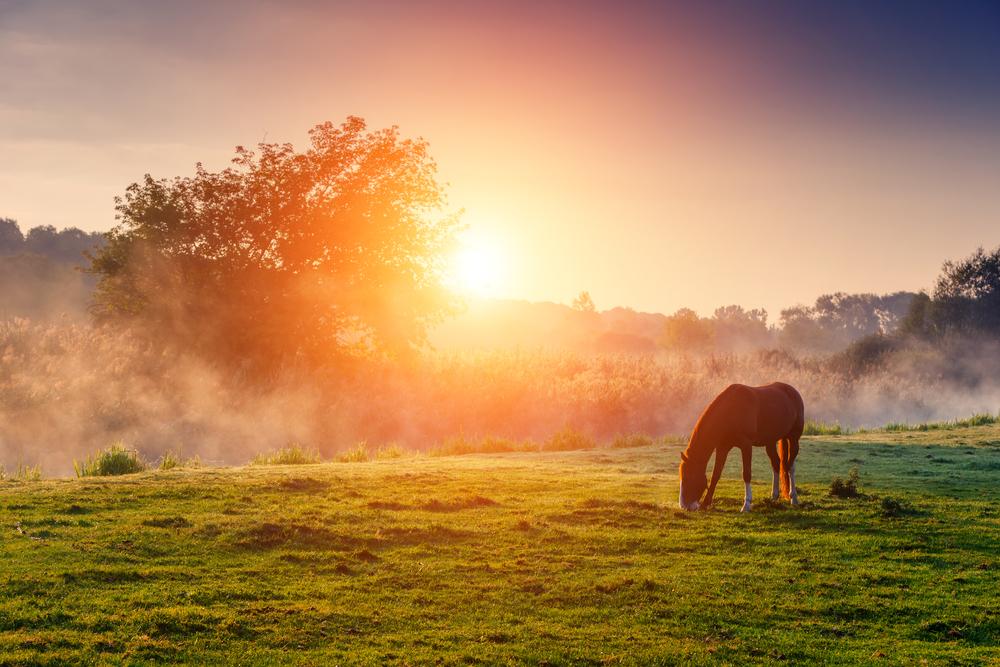 朝日が昇る牧場