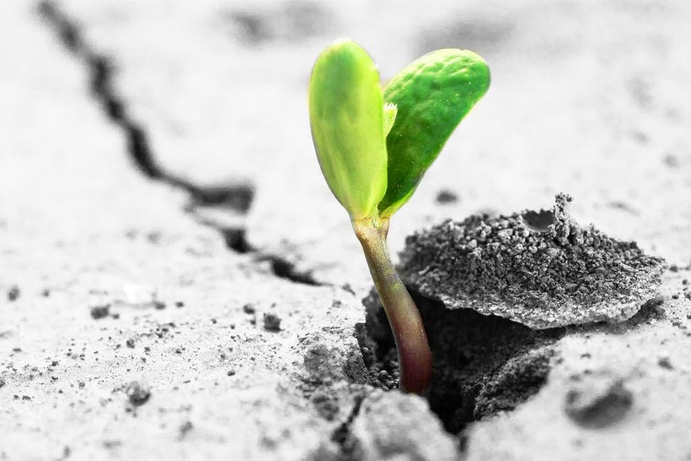 固い土から出てきた植物の芽