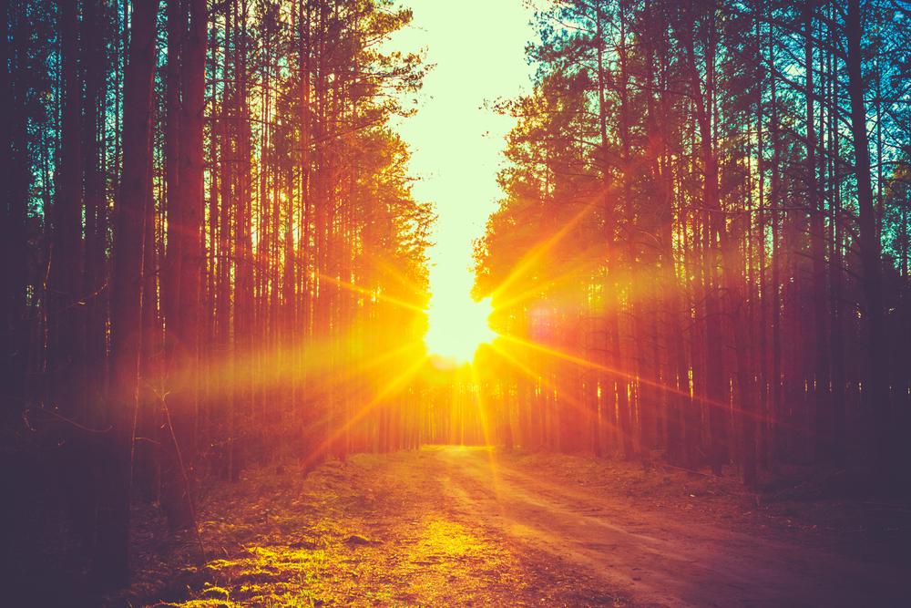 暗い森とその先から射す太陽の光