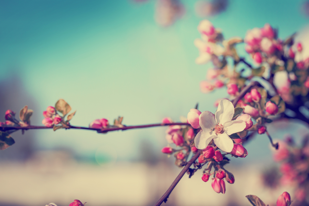 次々と花が咲いていく春の木の枝