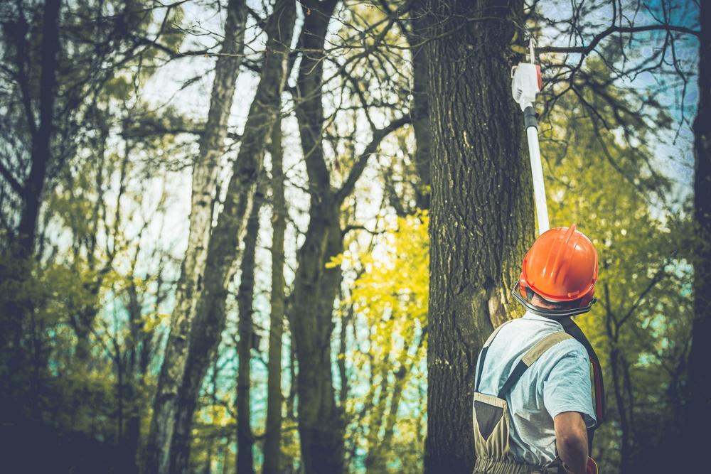 林業を営む男性