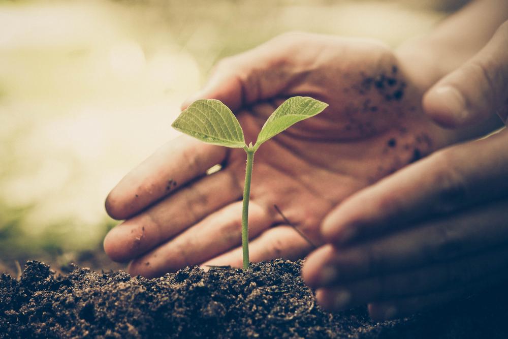 土に苗を植える人の手元